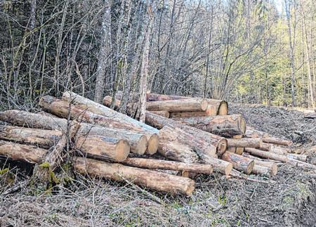 Drva danima čekaju na otpremu