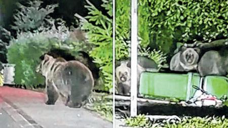 Četiri medvjeda šeću Delnicama